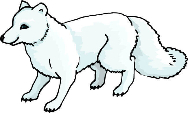 baby arctic fox coloring pages cute - photo #9
