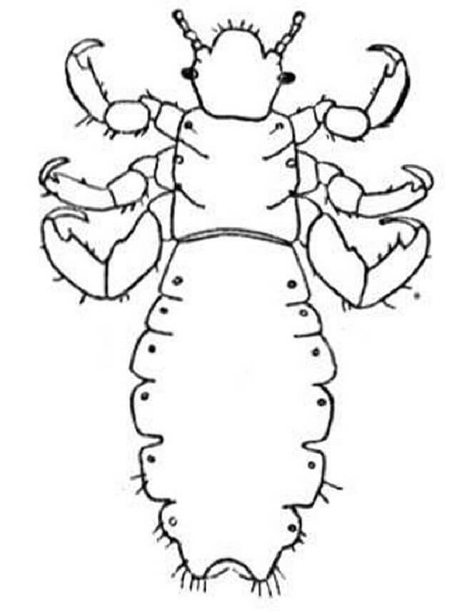 hickory dickory dock nursery rhyme activities crab clawed