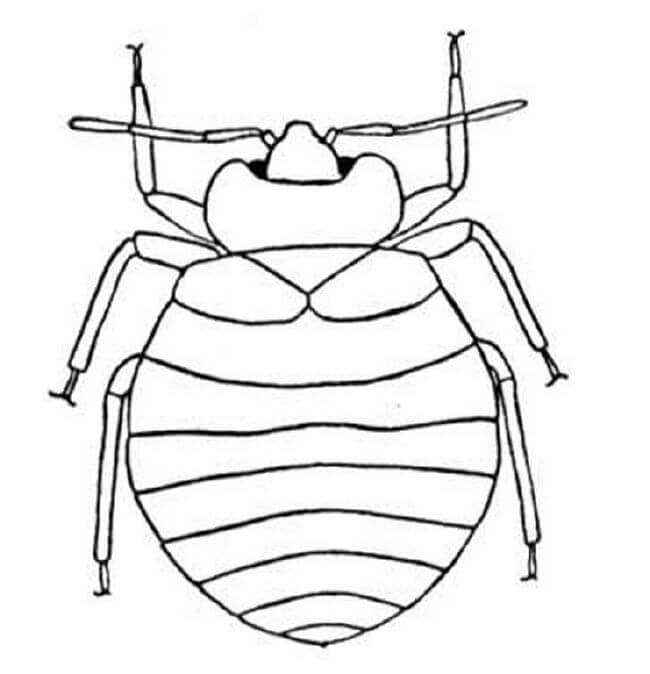 bug 3 - Bug Coloring Pages